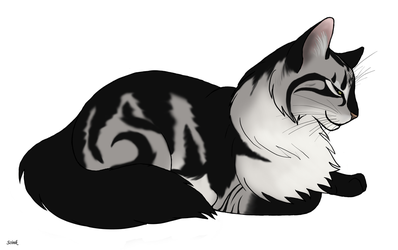 Silver Tabby by Scink