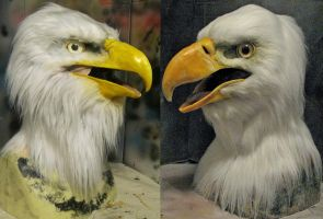 Old vs new! bald eagles by Crystumes