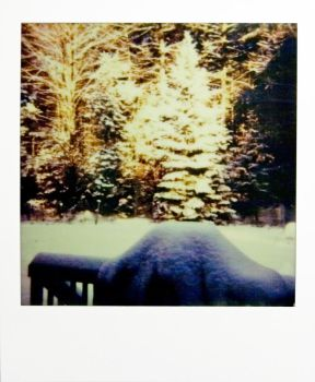 polaroid: the forest aglow with snow by JaydenDragon