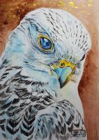World Watercolor Month - Day 29 (Falcon) by Harmony1965