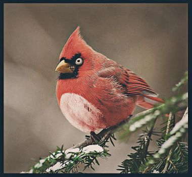 Real Life Angry Birds by ConstantinPotorac