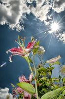 Flower and Sky 3 by CharlesWb