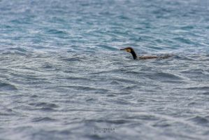 Hunter Cormorant by Ragnarokkr79