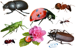 Insects - PNG by lifeblue