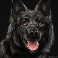 Black German Shepherd by Whitefurwolf