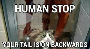 Human Stop by TheFunnyAmerican