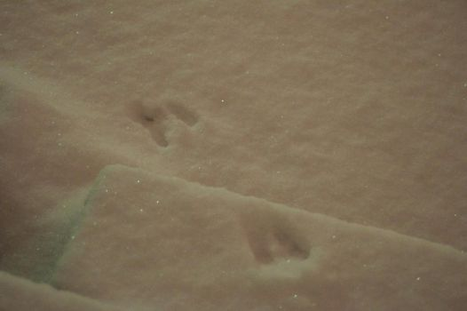 Snowfall 9 Bunny Tracks by Celebrith
