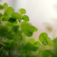 MY GREEN WORLD by jeminafredriika