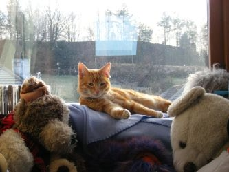 Ginger Cat 04 by Axy-stock