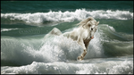 Breaking the wave... by snofoxx89