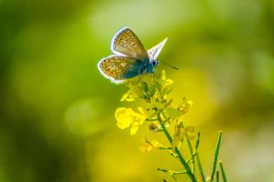 Blue Butterfly by kubinski078