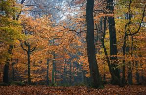 Autumn ballet by aw-landscapes