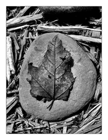 Leaf on rock by MichelleMarie