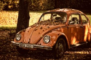 The Autumn Beetle by HannesDreyer