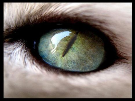 Eye of the tiger by Lintu666