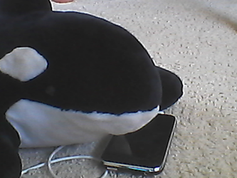 Willy Shamu and his Iphone 3gs by Dolphingurl21stuff