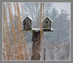 Snow on birdhouses. DSCN3895, with story by harrietsfriend