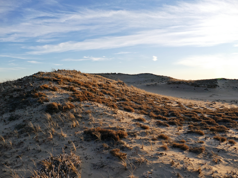 Winter dunes by Mogrianne