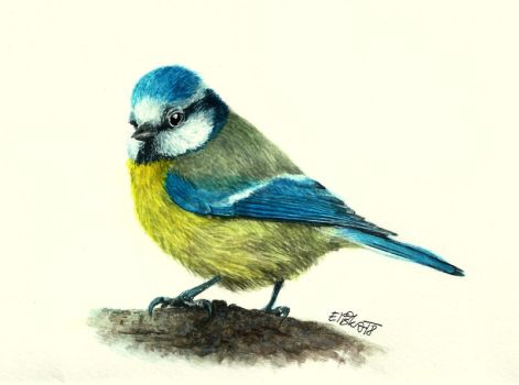 Blue Tit by Pampefox