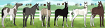 Foal Draw-To-Adopt Auction- WINNERS by CookieLoveXO