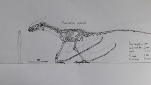 Another dragon skeletal by paleosir