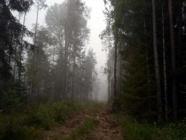 Forest 998 by MASYON