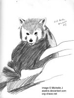 red panda sketch by Asatira