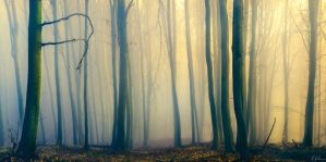 Forest of Light by RobinHalioua