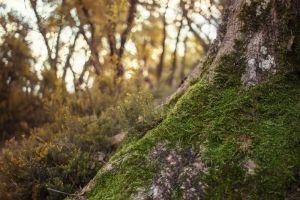 mossy tree by ZedLord-Art