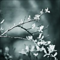 let's spring by Frall