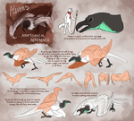 Haven's Anatomical Reference by PimsriARPG