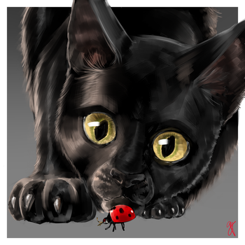 Ladybug and Cat by Supermare