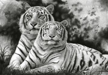 White Tigers by Thubakabra