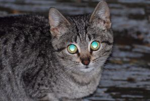 Cat Eyes At Night (Unedited) by GamerZzon