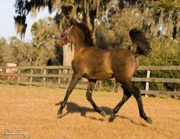 Five month old foal by Deirdre-T