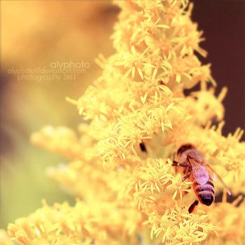 Bumble by Alyphoto