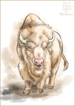 Beloved White Buffalo Watercolor by Cristalwolf