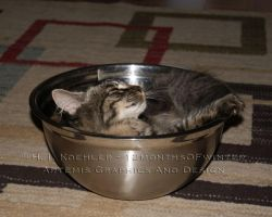 Bowl of Happy Cat by 12monthsOFwinter