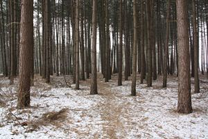 Winter forest 6 by Kiwiaa-Stock