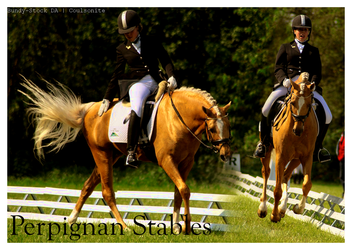 Dressage for ItsMePippin by Coulsonite