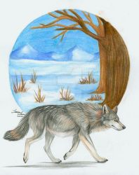 Gray Wolf by itsmar