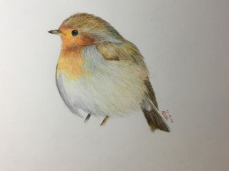 European Robin by Birdmusic
