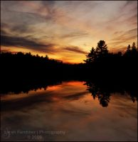 Red Pines by Sarah--Lynne