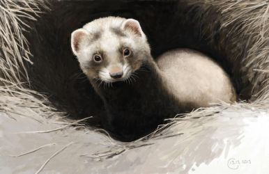 Steppe polecat by Renum63