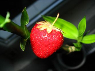 A strawberry... in a bamboo by AhrimanRave