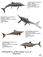 Ichthyosaurs of the Upper Lias of England by NTamura