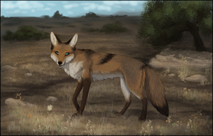 Coyote by nequita
