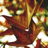 autunno III by s0n-et-lumiere