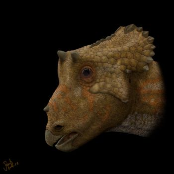Triceratops  juvenile. by Frank-Lode
