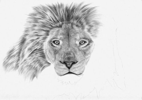 Lion in progress by Arpmadore